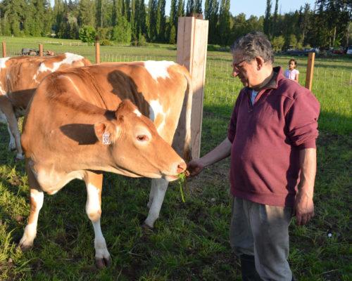 Cow Shelter Redmond WA